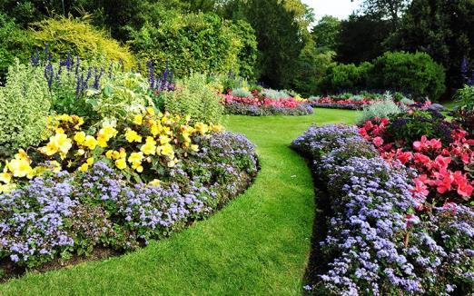 Plantation arbuste